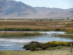 60 wetlands drained in iran