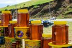 سالانه ۹۵۰ تن عسل در زنبورستان های استان قزوین تولید می شود