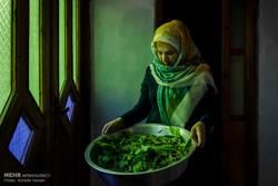 Sericulture in Iran's Golestan province
