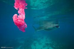 یک باکتری در اقیانوس توده های پلاستیکی ایجاد می کند