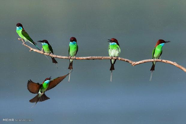 Doğanın güzelliğini anlatan görüntüler