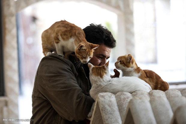 کلینیک گربه ها در حلب