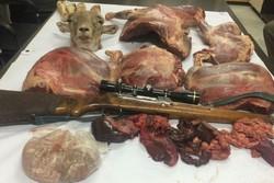 شکار غیر مجاز در شاهرود - کراپشده