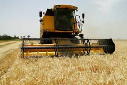 پیش بینی برداشت ۲۰ هزار تُن محصول جو از مزارع خرمآباد