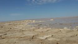 hamoun wetlands