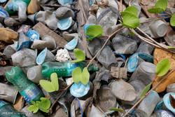 زنبور استرالیایی پلاستیک را منسوخ می کند