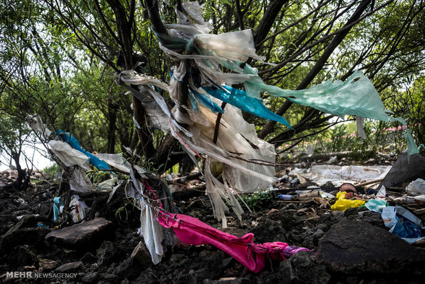 تاثیرات زباله های پلاستیکی بر حیات وحش