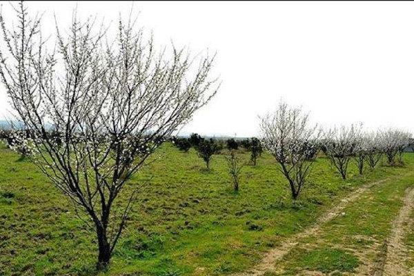 ۳ میلیون اصله درخت در اندیمشک کاشته شده است