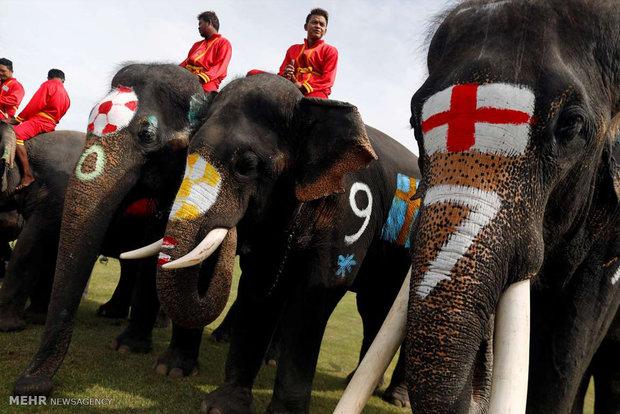 فوتبال فیل ها در تایلند