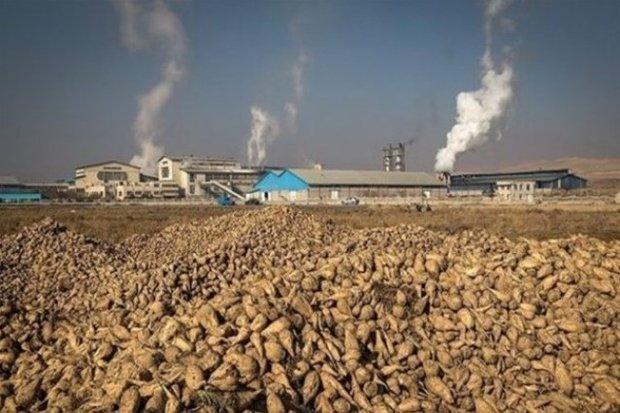 چغندرکاران شاهرودی پشتوانهای ندارند/ضرورت کشاورزیمنطبق با اقلیم