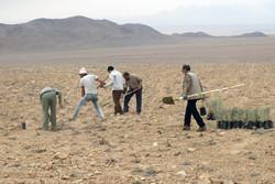 بهره برداری غیر اصولی از منابع طبیعی به بیابان زایی دامن می زند