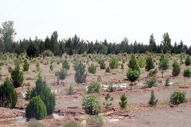 بیابانزدایی گسترده در استان بوشهر/۳۸ هزار نهال جنگلی کاشت میشود