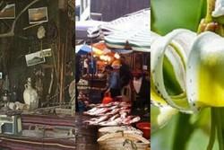 لذت خرید در بزرگترین بازار روباز کشور/ سروی با قدمت ۳۰۰۰ سال