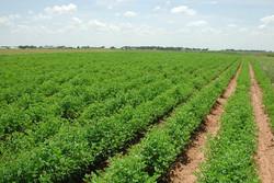 ۲۶ درصد تولیدات زراعی استان تهران متعلق به ری است