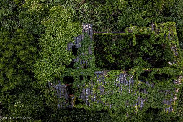 روستایی در محاصره گیاهان خودرو