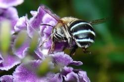 زنبورها پلاستیک دوستدار محیط زیست تولید می کنند