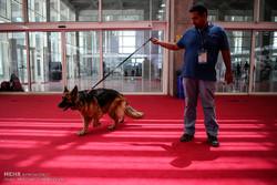 نمایشگاه بین المللی اسب.سگ و حیوانات همزیست