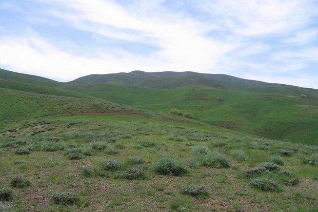 اجرای طرح قرق مراتع در ۱۷۲۰ هکتار اراضی کردستان