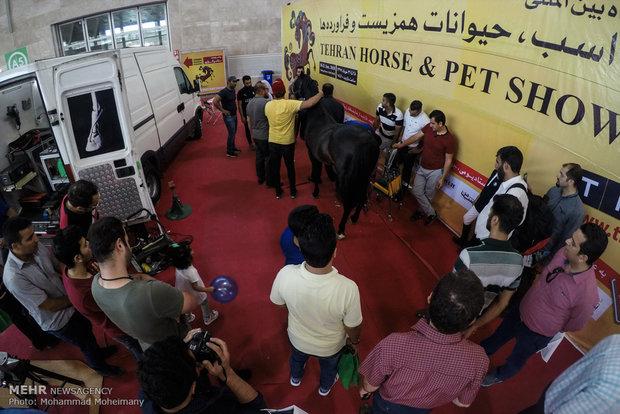 Tehran Horse and Pet Show 2018