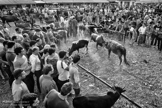 بازار مال(گاو) فروشان کوچصفهان