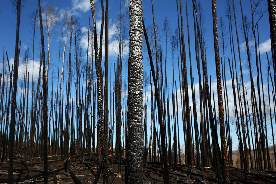 Fire in forests in northeastern Iran extinguished