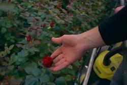فلم/  گلاب کے پھول  کا حیرت انگیز کھیت