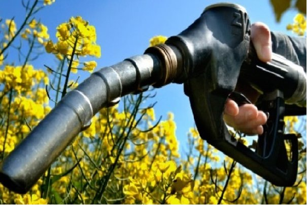 ۲پروژه ملی برای توسعه تولید سوخت زیستی در کشور اجرایی میشود