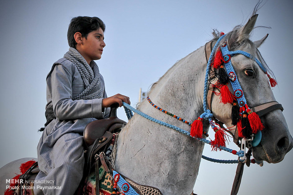المهرجان الوطني الثاني للخيول الاصيلة