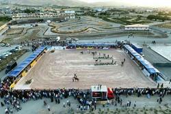 جشنواره زیبایی اسب اصیل عرب در استان همدان برگزار شد
