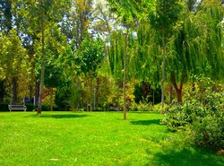 Tehran mayor pledges to build parks special for people with MS