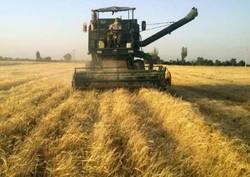 حمایتهای ویژه کرملین از کشاورزان روس در برابر آمریکا و اروپا