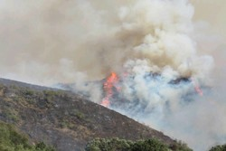 آتش سوزی پارک ملی گلستان - کراپشده