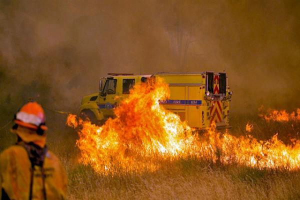 Orman yangınında bilanço gittikçe ağırlaşıyor