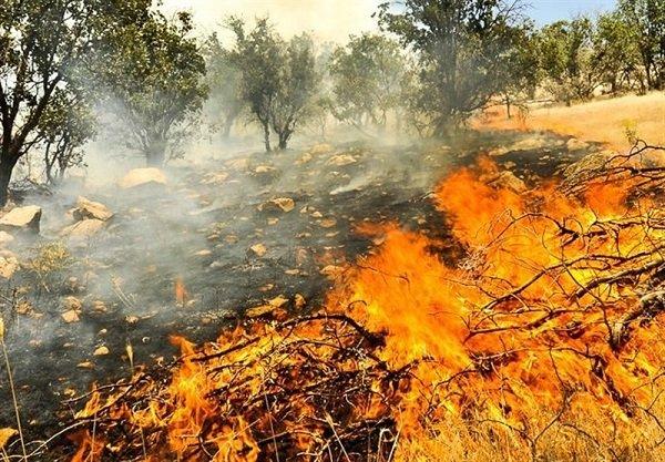 نیم هکتار از جنگل های روستای توشن در آتش سوخت