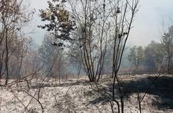آتش سوزی پارک ملی گلستان اطفا شد