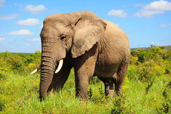 مراقب فیل درونتان باشید