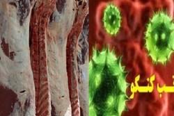 فعالیت ۲۹ اکیپ برای پیشگیری از بروز بیماری تب کریمه کنگو درهمدان