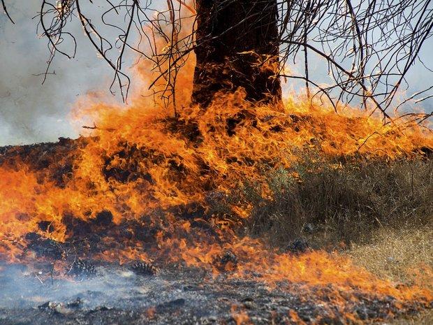 آتش سوزی گسترده در شمال کالیفرنیا