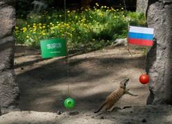 Fotoğraf: 2018 Dünya Kupası'nın falcı hayvanları