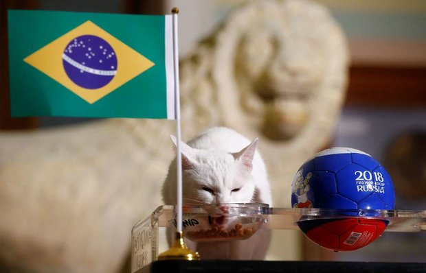 حیوانات پیشگوی جام جهانی