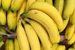 Banana imports into Iran declined by 33%