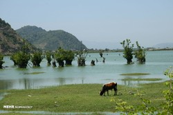 Photo depicts a view of Estil Lagoon in Astara, northern Iranian province of Gilan, July 8, 2018.