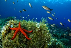 جنگل های مرجانی در عمق آبهای سیسیل