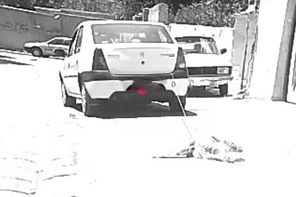 شناسایی عاملان حیوانآزاری در اردبیل/دادستان: بشدت برخورد میکنیم