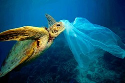 On the occasion of plastic-free day: Say no to plastic