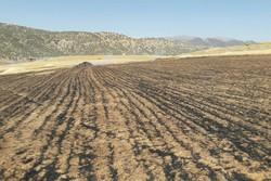 وقوع ۷ حادثه آتشسوزی مزارع و درختان در خرمآباد