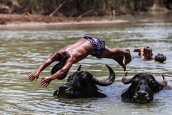 Children play with water buffaloes in Karkheh River