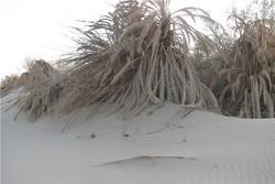 روستاهایی که در شن فرو میروند/ آخرین نفسهای ۱۵۰ روستا در ریگان