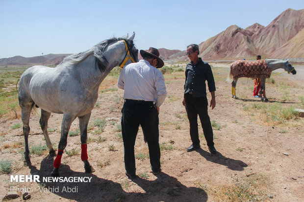 Summer horse racing in northwest Iran