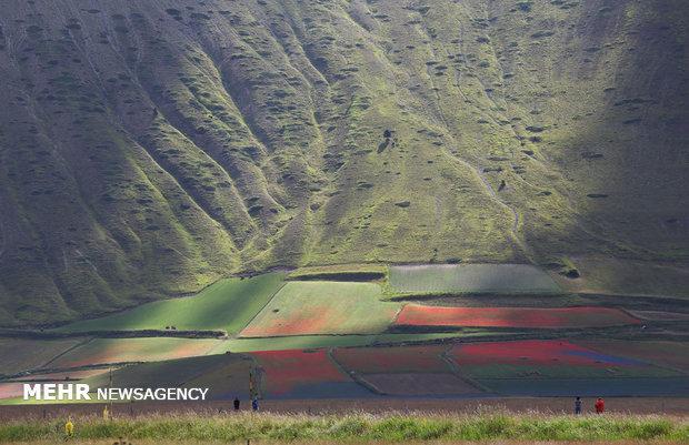مزارع زیبای گل در ایتالیا